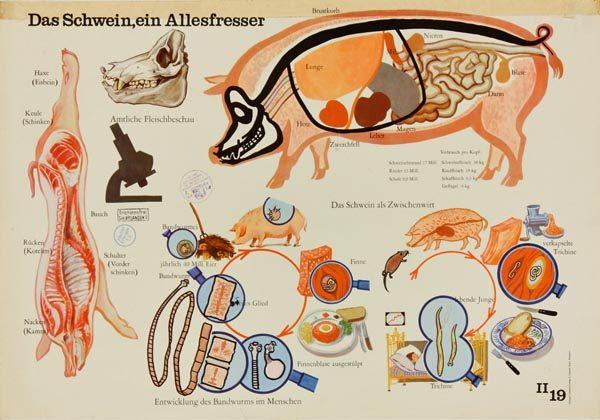 Großartig Innere Anatomie Des Schweins Fotos - Anatomie Von ...