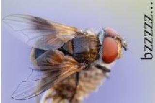 bzzzzz… viel Fliegen
